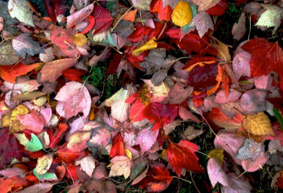 Fall 2019 Newsletter Picture of Leaves